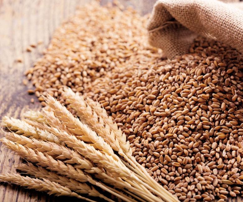 Le blé : Une histoire<br>de toujours